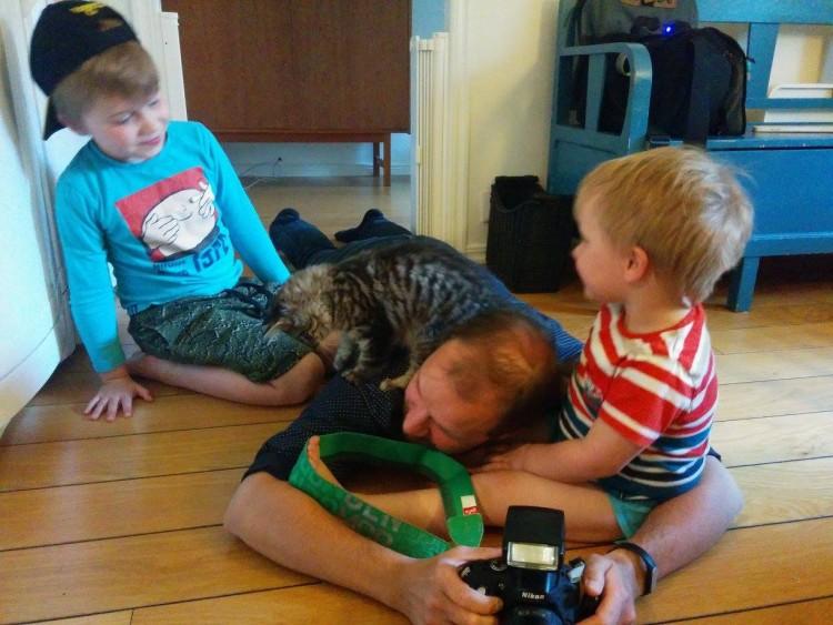 Maine Coon kattungar Huddinge Stockholm outcross Maine Coon kittens Sweden
