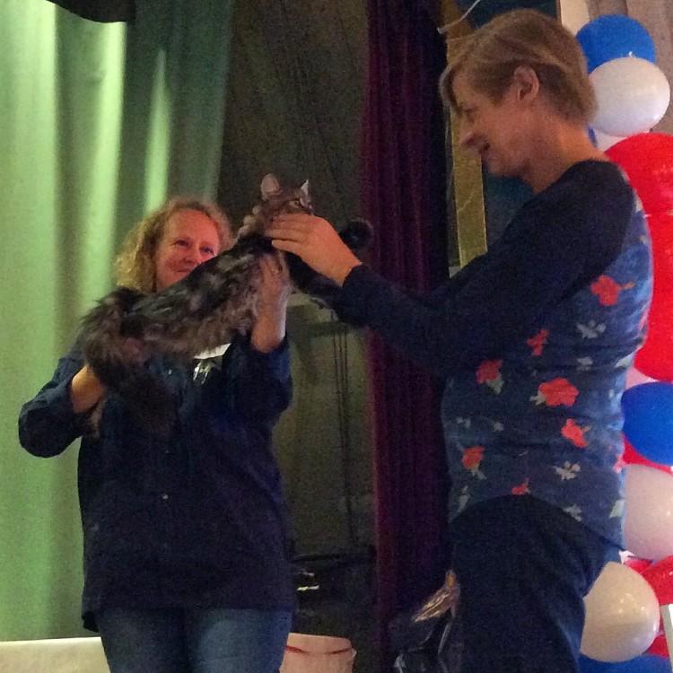 Lynx Luna Maine Coon katter kattungar Huddinge Stockholm