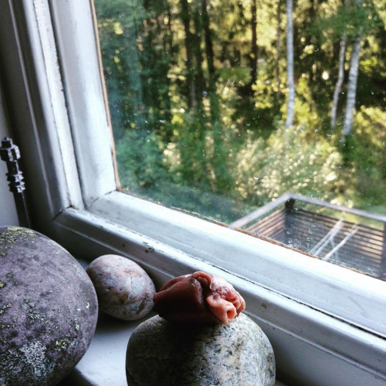 lynx luna maine coon uppfödare stockholm huddinge kattungar