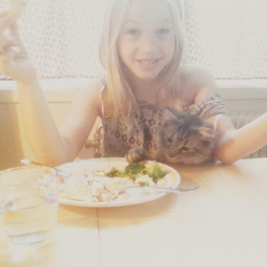Lynx Luna Maine Coon uppfödare Stockholm Huddinge outcross foundation kattungar