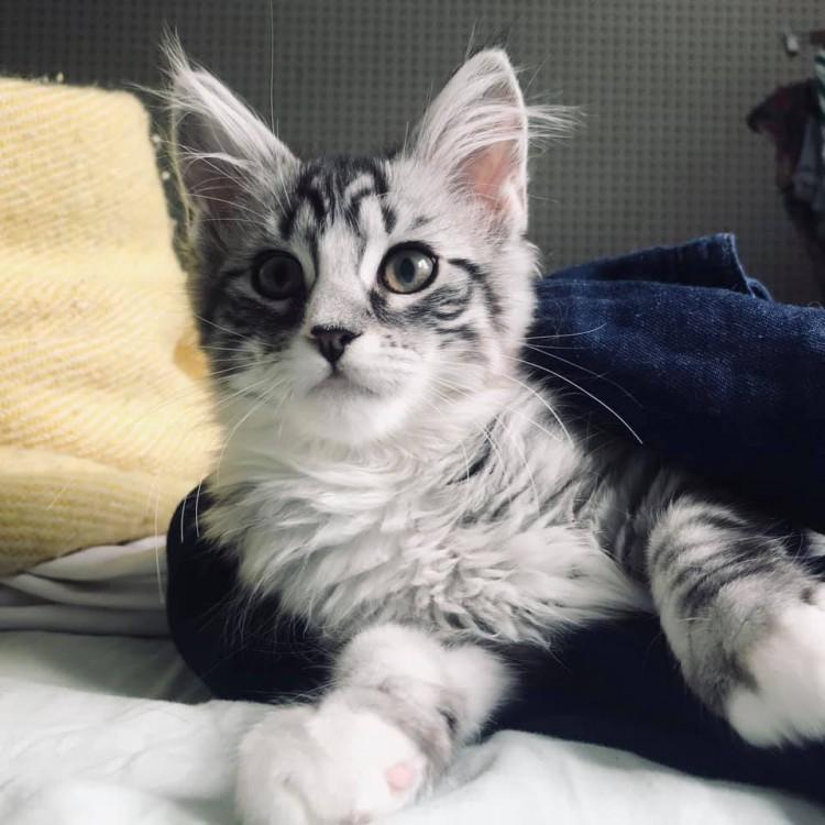 Lynx Luna Ostarta